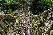Umshiang Root Bridge