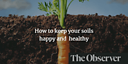 How to keep your soil happy and healthy
