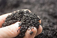 The Garden Decoder: What Is 'Biochar'? - Gardenista