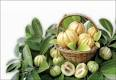 Advanced Pure Garcinia Cambogia Beans
