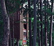 World's largest tree house – exquisite and spacious
