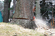 Tree Removal Croydon - What You Should Know