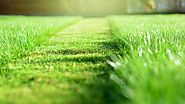 Do's And Don'ts Of Managing A Lawn Fertilizer By Yourself – Frozen Blog