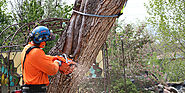 Searching For Tree Removal Service Features | Home Furniture Store