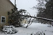 Winter Storms Can Cause Tree Damage | Living In This Season