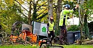 Things to Remember to Select the Best Tree Removal Service - Arsh Wood
