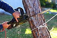 Why You May Have To Use A Tree Removal Service? - Susan Philmar