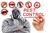 Pest Control In Faridabad