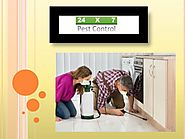PPT - Offering Most Viable Pest Control Services in Faridabad PowerPoint Presentation - ID:8061256
