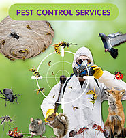 ALL TYPES OF PEST CONTROL SERVICE PROVIDER IN FARIDABAD