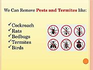 Affordable Pest Control Company In Faridabad