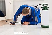 Choosing your Reliable Pest Control Service in Faridabad