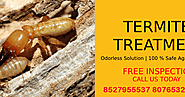 Need of the Pest Control Services In Faridabad