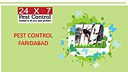Pest Control Services In Faridabad