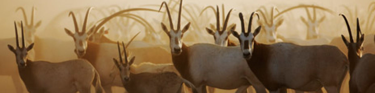Headline for Gazelles & Deer you Can Find in Sir Bani Yas – Discovering the Diverse Wildlife on the Magical Island