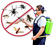 Ensure health and safety by hiring Pest Control Delhi – pest control service