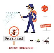 Pests Removal: How Imperative It Is For Your Home?