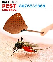 Are Looking for Termite Control Service in Delhi