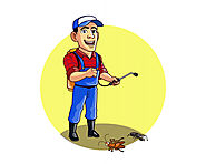 How to prevent pest infestation in your kitchen after pest control services – Pest Control Delhi