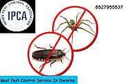 See Effective Result with Pest Control Service Dwarka