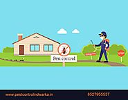 Choosing your Reliable Pest Control Service in dwarka