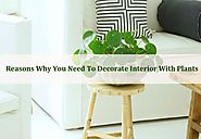 Reasons Why You Need To Decorate Interior with Plants - Urban Living Designs