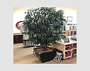 8.5′ HAPIS TREE IN CENTER FOR SAMPLE SALE JUST IN $490