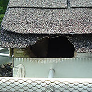 Solution For Roof Rats in Attic