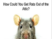 Get Rats Out of the Attic