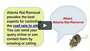 Exclude Roof Rats In Attic Area