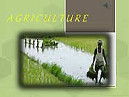 Types of Agriculture | Benedict T. Palen, Jr