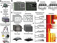 Software tools for single-cell tracking and quantification of cellular and molecular properties | Nature Biotechnology
