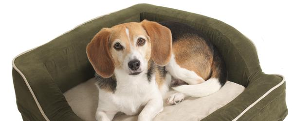 Headline for Best Rated Self Warming Pet Bed Reviews 2014