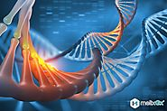 Types Of Genetic Testing and Overview