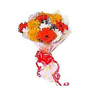 Buy/Send Colourful Gerbera Online Same Day Delivery - OyeGifts.com