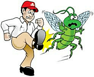 Professional Pest Management Control for Mosquitoes – Pest Control 24X7