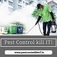 Looking the Reliable Pest Control Services in Gurgaon