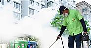 Need for Hiring Pest Control Services from Leading Company