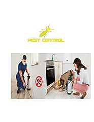 PPT - Hire The Right Pest Control Company in Gurgaon PowerPoint Presentation - ID:8157564