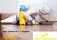 Best Pest Control Gurgaon services