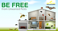 Top Pest Control In Gurgaon