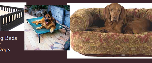 Headline for Raised Dog Beds For Large Dogs