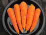 Carrots, Scarlet Keeper