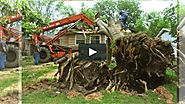 Rowell Tree Removal Emergency Service