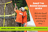 Roswell Tree Removal