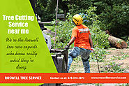 Roswell Tree Cutting Service
