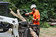 Tree Removal Roswell