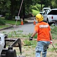 Family Owned Tree Removal in Roswell | Roswell Tree Service