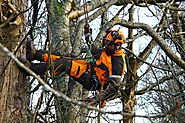 The importance of Tree Surgeon in Bournemouth Areas