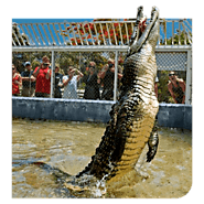 Cayman Wildlife attractions | Animal Feeding Shows